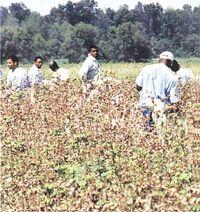 Angola-prisoners