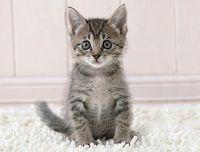 Kitten-Thinks-R