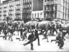 Iamge_123b_circus_elephant_parade_3