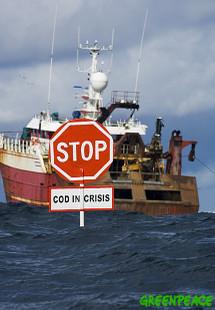 Greenpeacevolunteersattempti