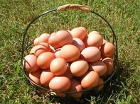 Eggbasket_2